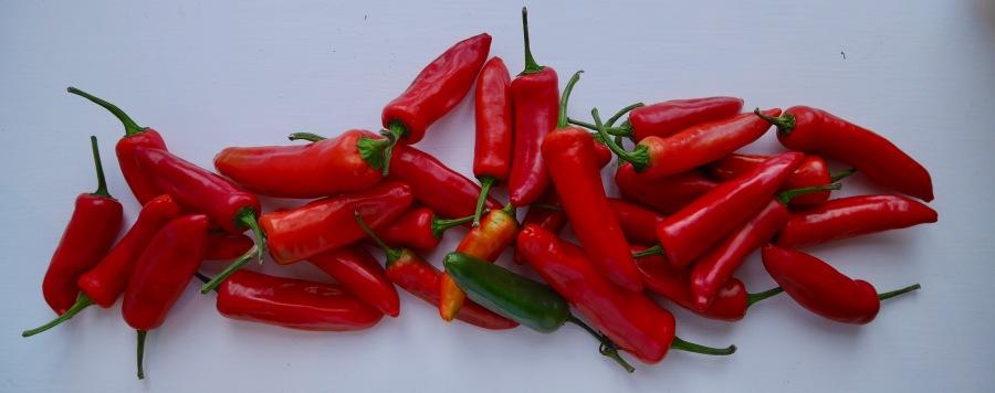 recipe: firey pepperjam